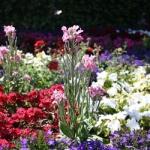 Ogródek kwiatowy