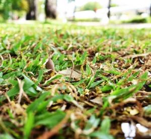 Przegląd trawnika po odwilży