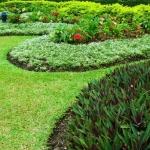 Co zrobić ze zbędną ziemią z ogrodu?