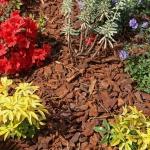 Ściółkowanie – na czym polega i co dzięki niemu zyska Twój ogród?