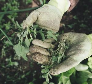 Jak wybrać odpowiednie środki ochrony roślin?