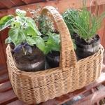 Koszyk ziołowy