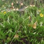 Substancje czynne w roślinach