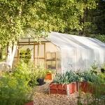 W którym miejscu ogrodu, działki powinien stanąć tunel foliowy?
