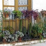 Rośliny wieloletnie na balkonie