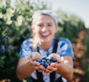 Borówka amerykańska – odpowiednie nawożenie gwarancją dorodnych owoców