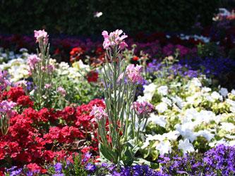 ogrodek-kwiatowy